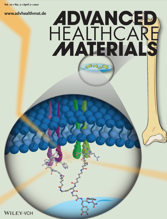 portada_Adv_Healtcare_Mat_An Engineered Biomimetic Peptide Regulates Cell Behavior by Synergistic Integrin and Growth Factor Signaling.png